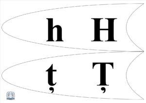 Literele și grupurile de litere - Petală h,ț