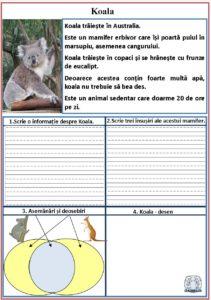 Litera k - Koala
